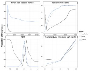 Curves show probability of occurrence for Saltmarsh Sparrows, Nelson's Sparrows, and hybrids - based on ecological niche models