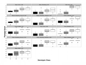 Boxplot of scores (range of values: 1-5) for the 13 individual plumage traits observed in 254 Saltmarsh, Nelson's and hybrid individuals in this study, distributed across genotypic class: pure Nelson's Sparrow (A), backcrossed in the direction of Nelson's (B), backcrossed in the direction of Saltmarsh (C), and pure Saltmarsh Sparrow (D). R values are provided above each plot indicating the strength of the correlation for each plumage trait when regressed against the genetic data (hybrid index).